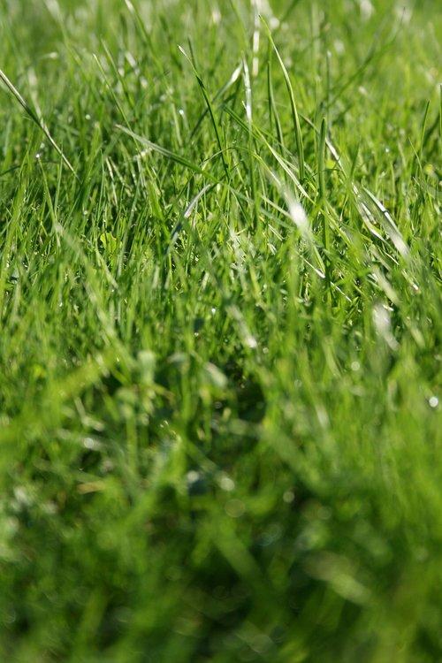 grass  wild meadow  green