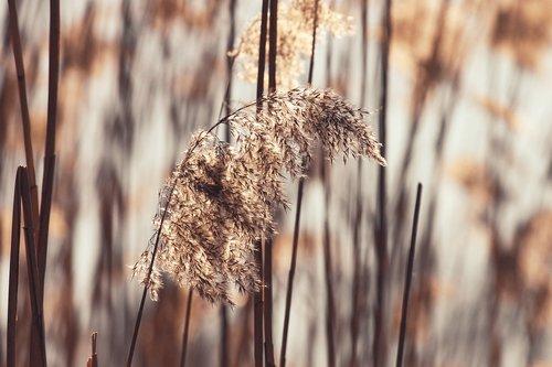 grass  blade of grass  bank