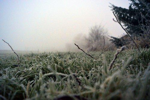 grass  frost  winter