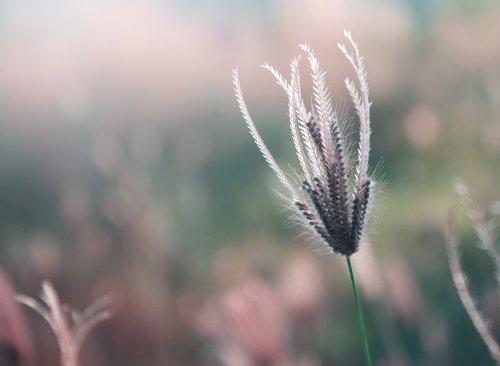 grass  flower  flowers