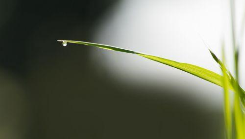 grass blade of grass meadow