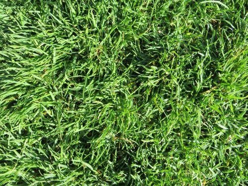 grass green structure