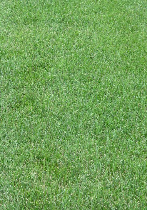 grass lawn yard