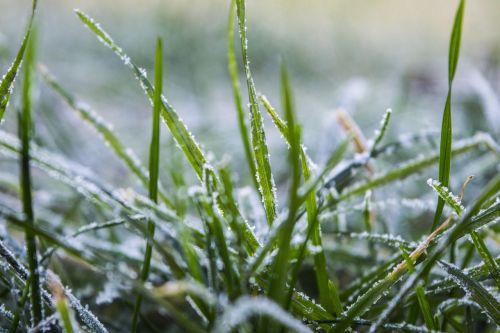 grass frozen winter
