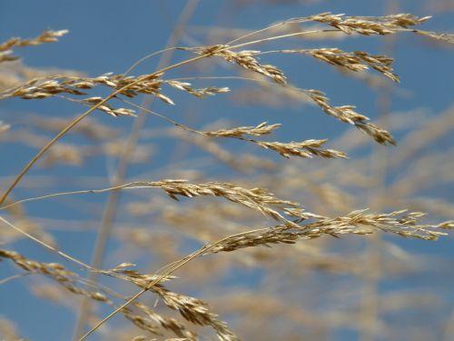 grass wind blow