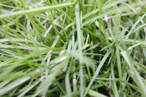 grass nature grasses