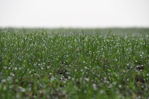grass dewdrop green