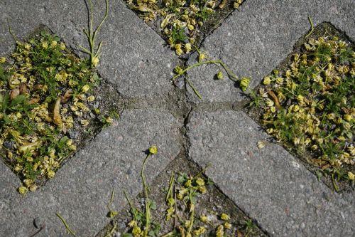 grass bricks tick