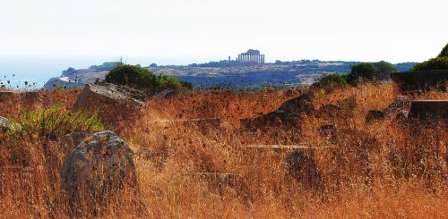 grass acropolis dahl