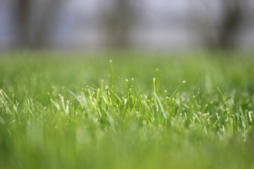 grass rush focus