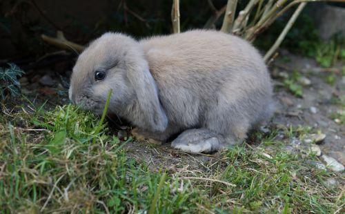 grass fur rabbit