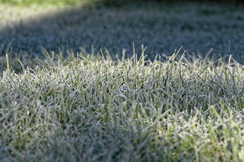 grass ripe frost