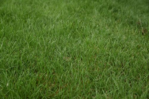 grass green plant