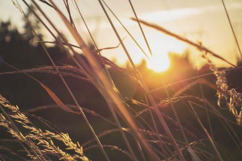 žolė,augalas,saulėlydis,makro,gamta,pieva,aplinka,augimas,žydi,žiedadulkės,Iš arti,botanikos,flora