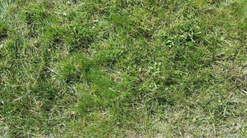 grass meadow green