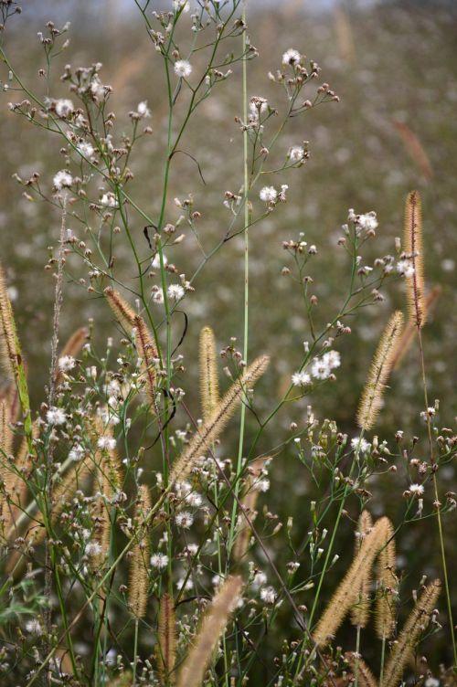 grass green flower