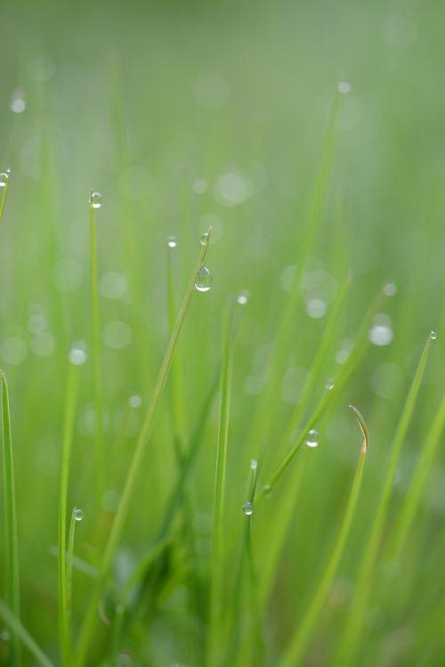 grass blade of grass drop of water