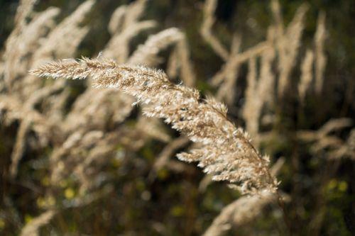 grass forest bluegrass