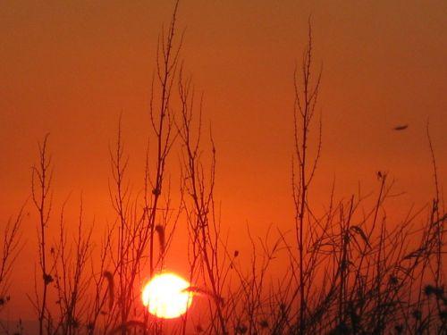 žolė ir saulėlydis,saulėlydis,raudonas saulėlydis