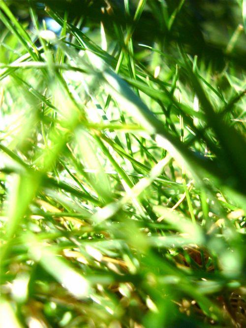 žolė, makro, uždaryti & nbsp, žalias, lauke, vasara, žolės makro