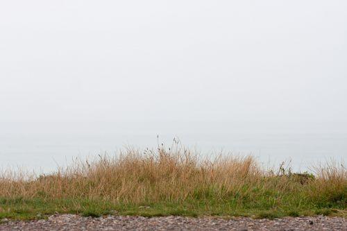 Grass Misty Morning Ocean