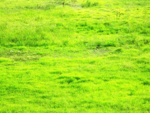 laukas, žolė, žalias, perdanga, žolės perdanga