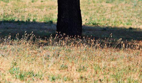 grass tufts tree trunk