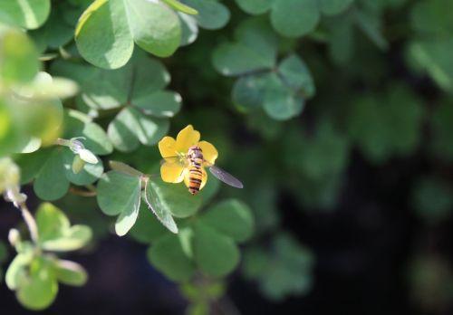 grass vinegar sauce flower clover