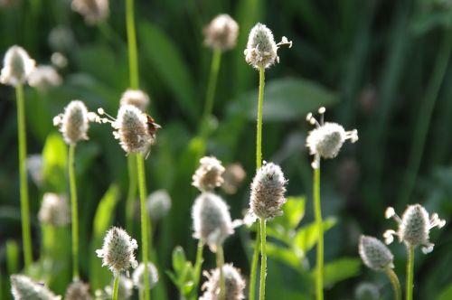 Grass Weeds At Sunset