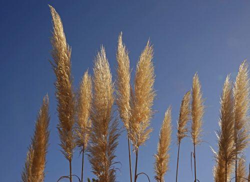 grasses halme flora