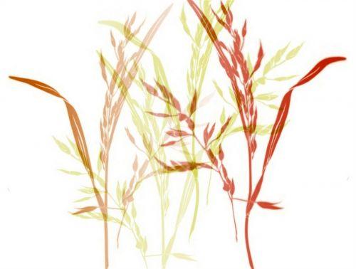 grasses stengel blurry