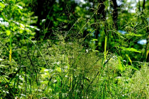 grasses forest nature