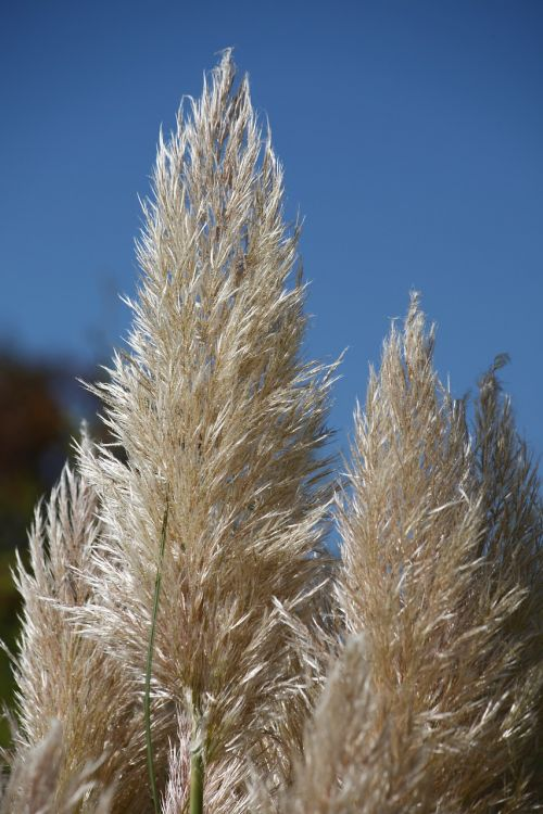 grasses autumn halme