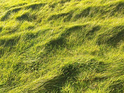 žolės,žolė,gamta,žalias,augalas,žaislinė žolė,pieva,kraštovaizdis,žalia žolė,aukšta žolė,Nebaigtas,laukinė žolė,žole pieva,vėjas,struktūra,tekstūra,fonas,modelis