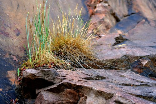 grasses  rock  nature