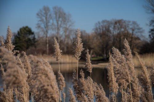 grasses  nature  landscape