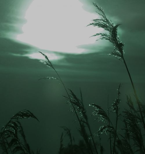 grasses mystical distorted