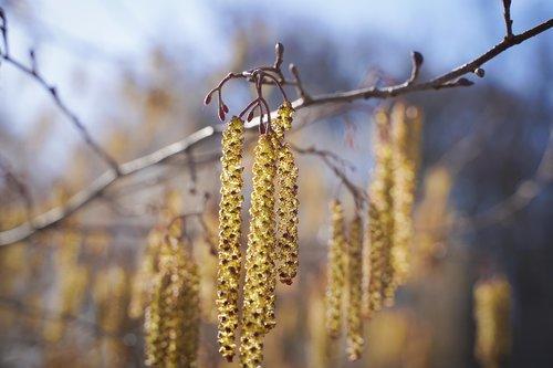 grasses  tree  pollen