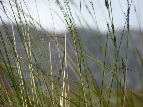 grasses plant close