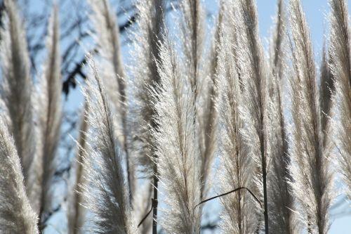 grasses charcoal nature