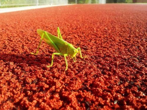 grasshopper sports ground contrast