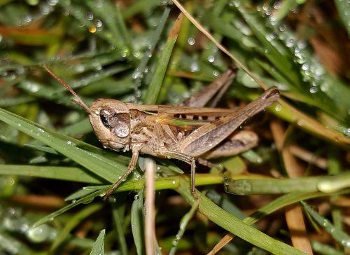 grasshopper slant faced grasshopper hopper