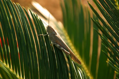 grasshopper animals palm