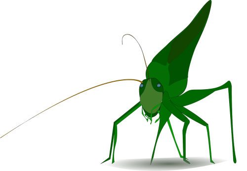 grasshopper insect green