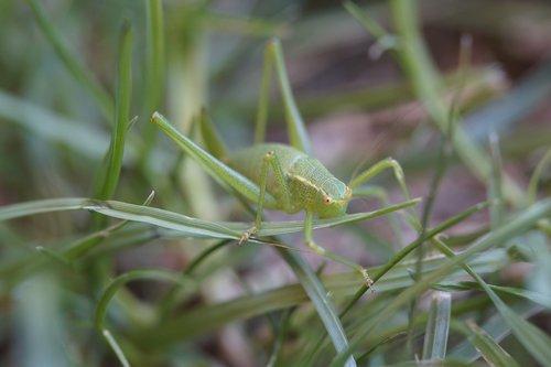 grasshopper  macro  grass