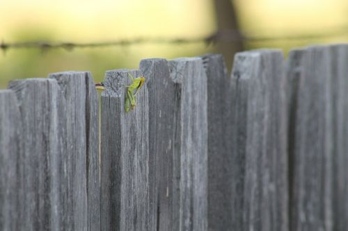 grasshopper fence rural