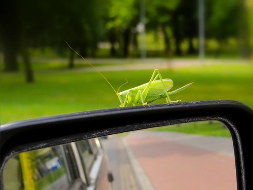 grasshopper green  insect  antennae