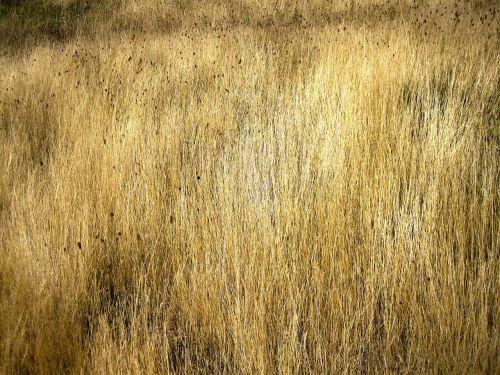 grassland texture patagonia