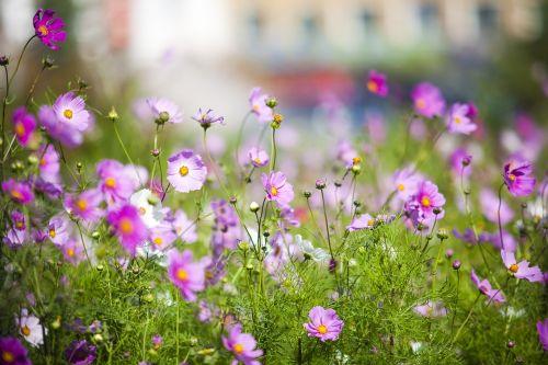 grassland little flower pure