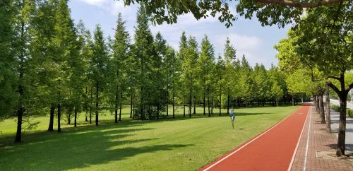 grassland trees athletic track